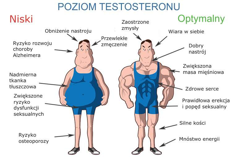 testosterone do